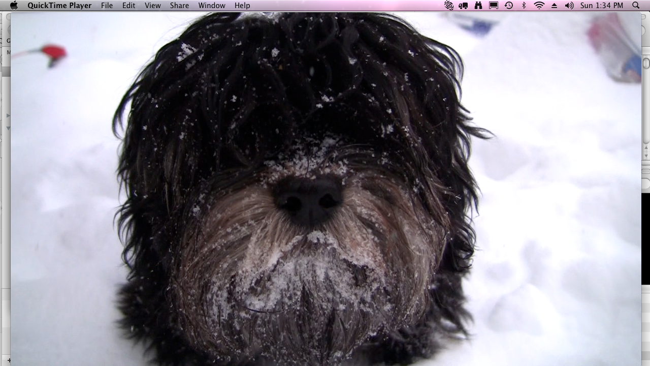 Choco_snowy_beard_winter_2010