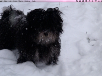 Choco_alert_in_snow_winter_2010