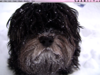 Choco_snowy_beard_winter_2010